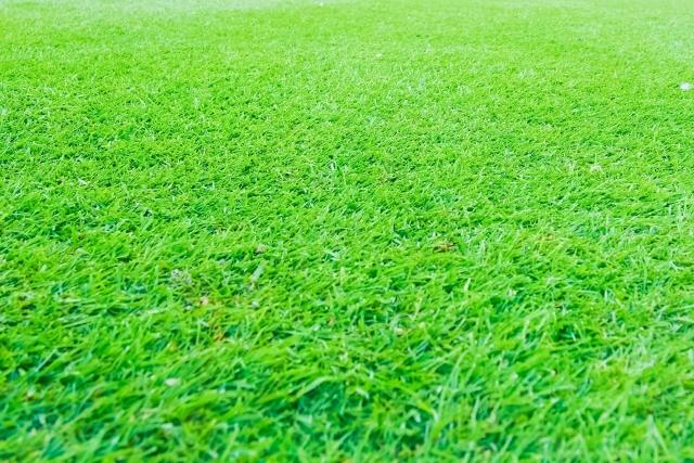 庭にゴルフ場を作ろう!本格的グリーンを作って毎日練習!