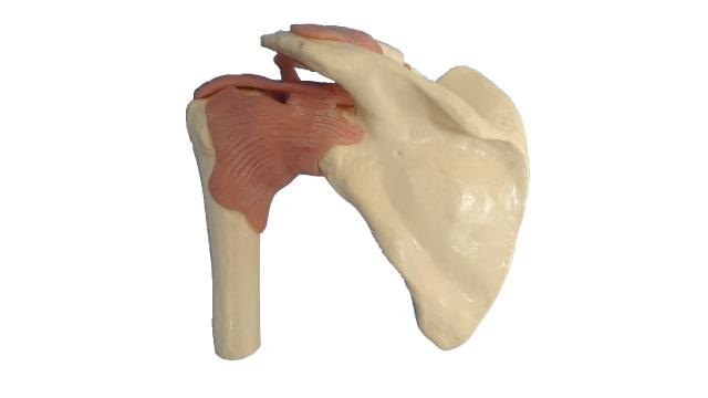 理想的なインパクトを迎えるために左肩甲骨の動きをよくする