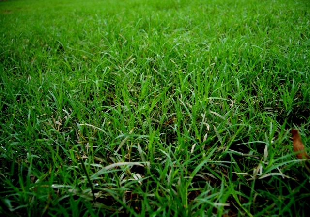 ゴルフコースの長い芝草でも気にならないラフの打ち方とは