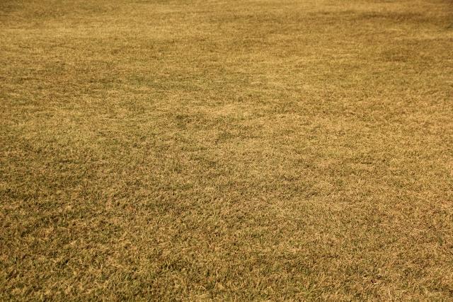 季節で変化するゴルフ!難しい冬芝アプローチを攻略する!